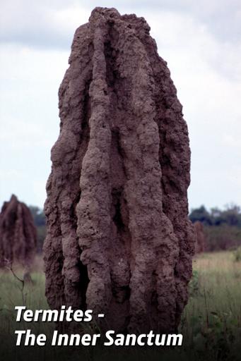 Termitele, bio-arhitecți desăvârșiți