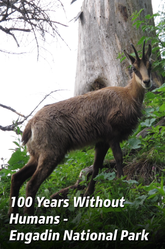 100 Years Without Humans - Engadin National Park
