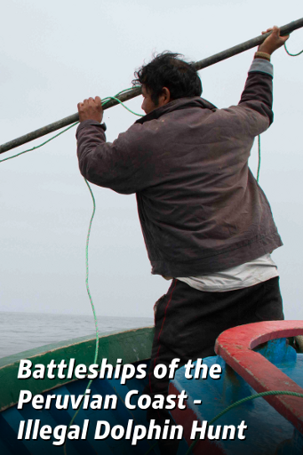 Battleships Off The Peruvian Coast - Illegal Dolphin Hunt