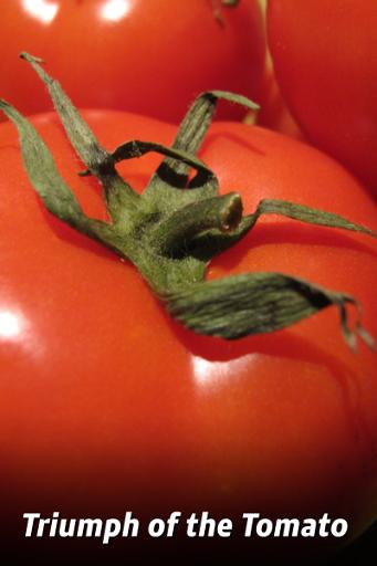 Triumful tomatelor
