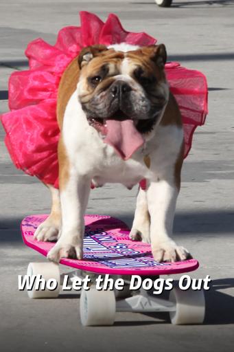 Cine-a dat drumul la câini?
