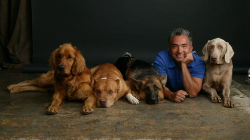 Cesar si câinii