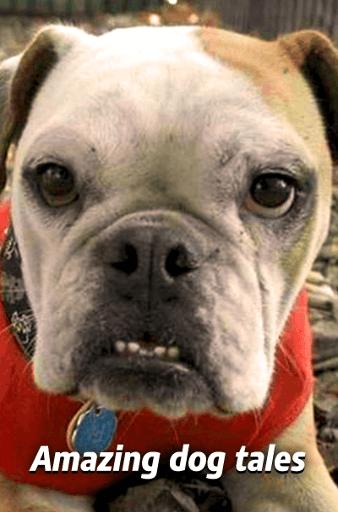 Nemaipomenitele povești cu câini